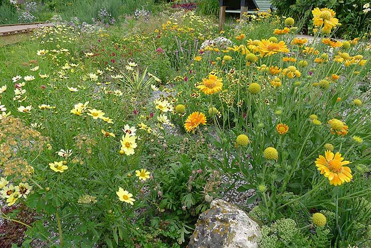 Xeriscape Garden Example