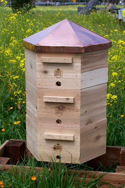 beekeeping in colorado new town ordinance
