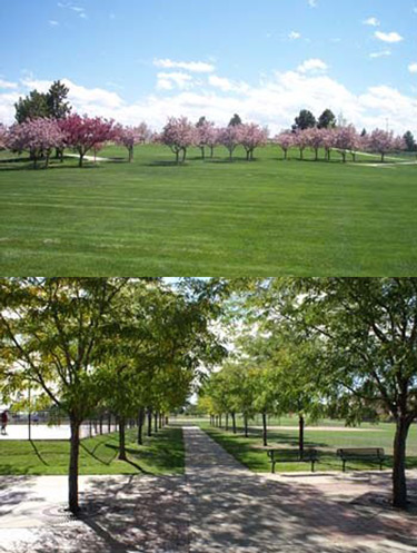 Butterfield Park at The Meadows
