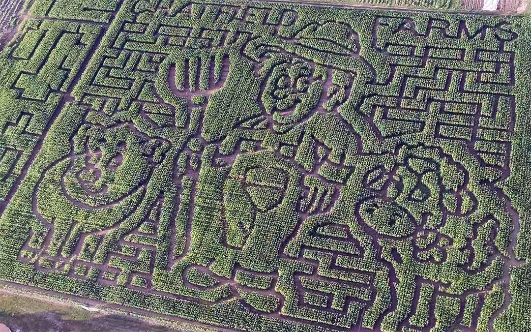 Chatfield Farms Corn Maze
