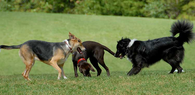 Off leash dog parks in Douglas County