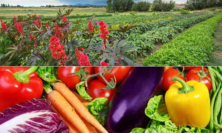 Organic Fruits & Vegetables from Farm2Table Co-op
