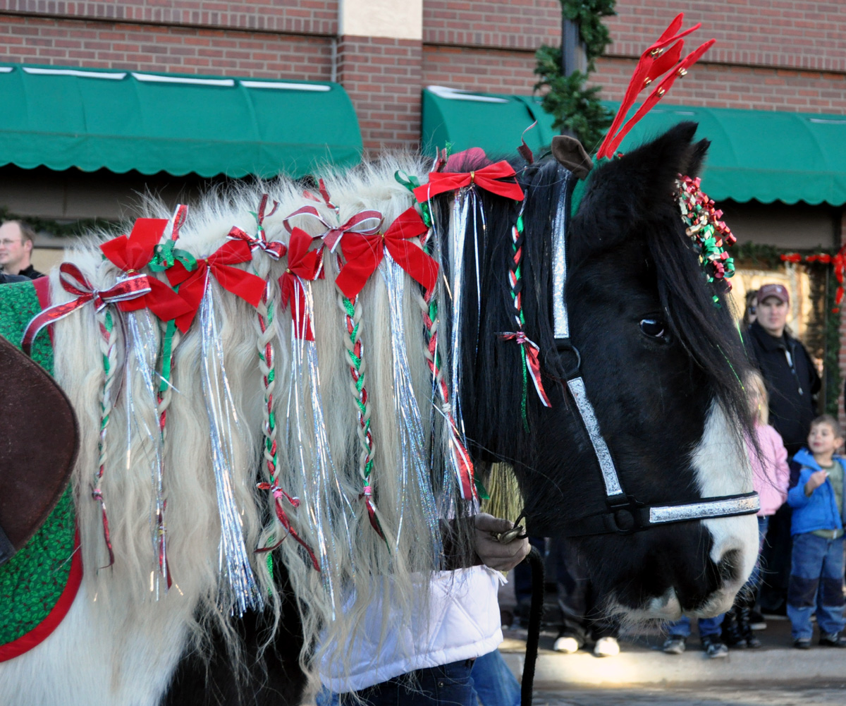Christmas Horse Decorations.2017 Parker Christmas Carriage Parade Events