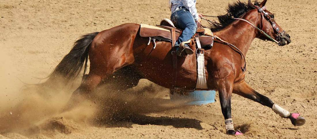 Parker CO Horse and Rider