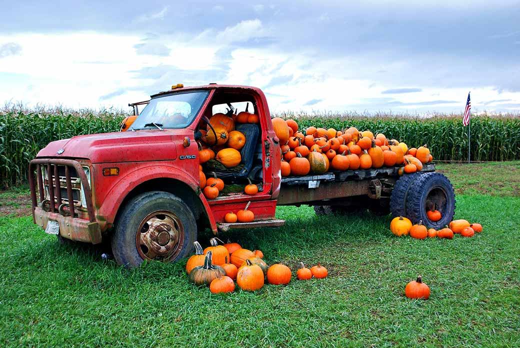 Pumpkins on Truck
