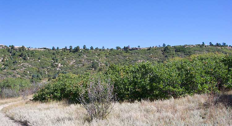 South Ridge Castle Rock CO